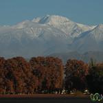 Autumn Colors Below the Andes - Mendoza, Argentina