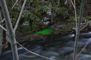Green Goldstream