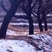 Winter by seyed mostafa zamani