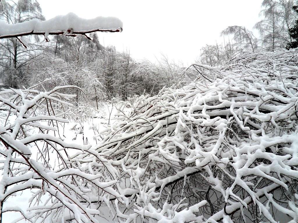 зима 2011 011