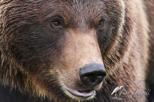 bear125sm1
