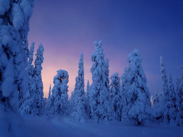 Árboles nevados en Finlandia
