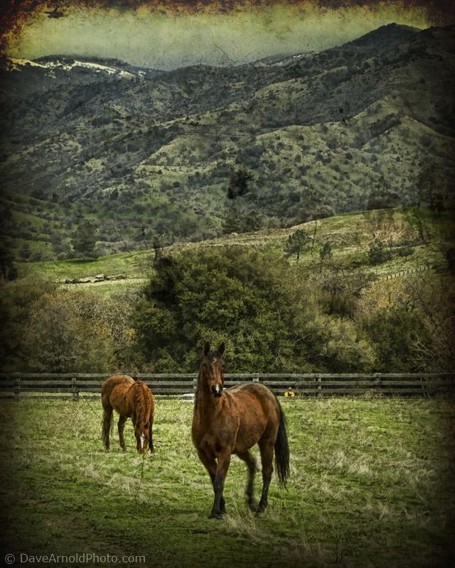 Pine Spring Kern County California Tripcarta