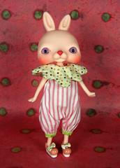 bunnyup01