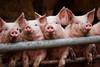 party pigs (71/365) by Tim Geers