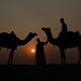 The Dream Sunset Silhouettes at Thar Desert