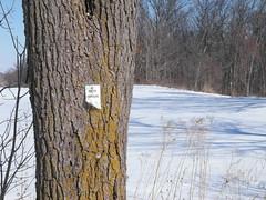 Big Tree, Small signage