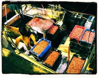 ArrivalOfMaineShrimp-SacoMaine'sCampEllis(Feb10-2011)1