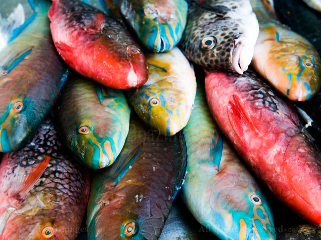 Small edible fish for Types of edible fish