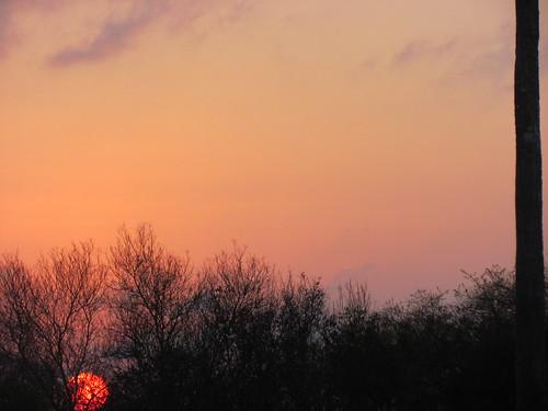 pink blue trees sunset sky nature clouds golden horizon