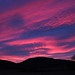 Red sky in morning, Shepherds warning by Machiavellian Sheep