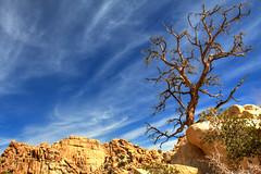 Joshua Tree national park-3.jpg