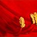 Amarilis (hippeastrum vittatum)
