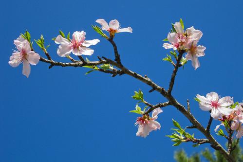 11/52 Blossom