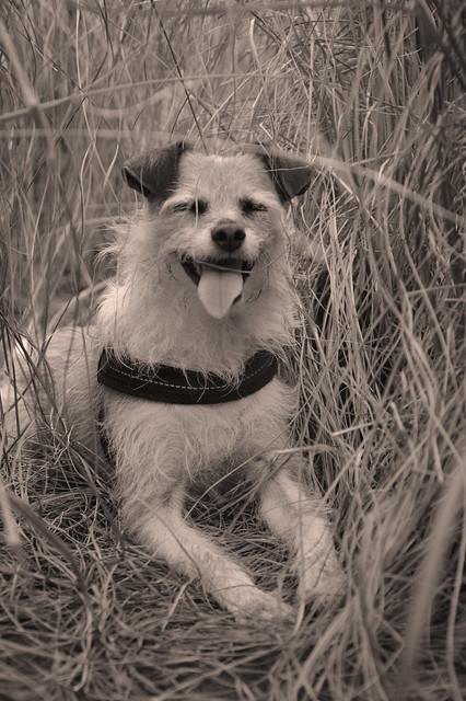 Hund Josy