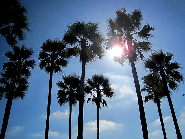 Palm Trees from Flickr via Wylio