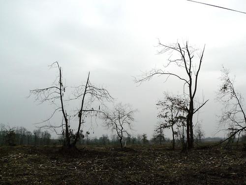 Saint Perdon (Landes): deux ans après le passage de Klaus