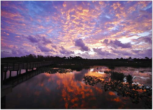 morning usa nature clouds sunrise reflections landscape nikon natural florida wetlands boardwalk waters ecosystem delraybeach palmbeachcounty wakodahatcheewetlands earlylight colorfulskies coth5 tnwaphotography palmbeachcountywaterutilitiesdept southernregionalwaterreclaimationfacility