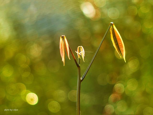 Bokeh and backlighting - Beautiful Bokeh Photography