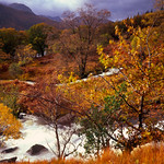 Glencoe-Nov2010-G11