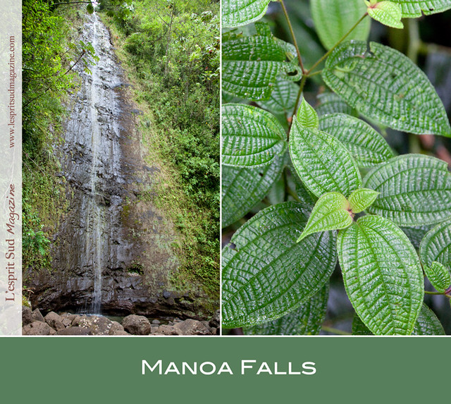 Manoa Falls, Honolulu
