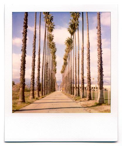 california road street trees palms polaroid sx70 vanishingpoint row palm palmtrees 600 modified citrus oranges agriculture redlands pola polaroid600 groves lineout modded nofilter sunkist timezero landcamera builtin inlandempire polaroidsx70 sanbernardinocounty polaroid779 779 iso640 eyetwist sx70landcamera nond sx70lives sx70uses600or779 eyetwistkevinballuff northredlands