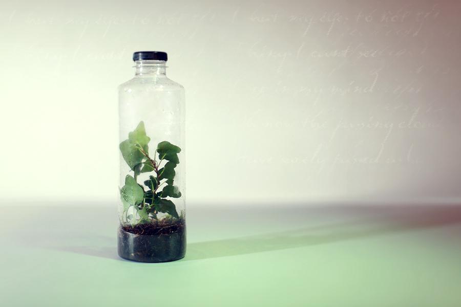 Micro Ecosystem