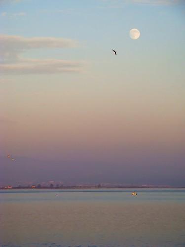 pink blue moon portugal sunshine birds clouds geotagged boat purple gaivotas dusk sony lagoon moonrise nuvens lua ria anoitecer gaivota aveiro torreira crepúsculo riadeaveiro ip3 escurecer sonydsch9 twighlighttime ilustrarportugal ip6 ubichan mygearandme mygearandmepremium mgam6 geo:lat=4071887091128624 geo:lon=8698714694442742