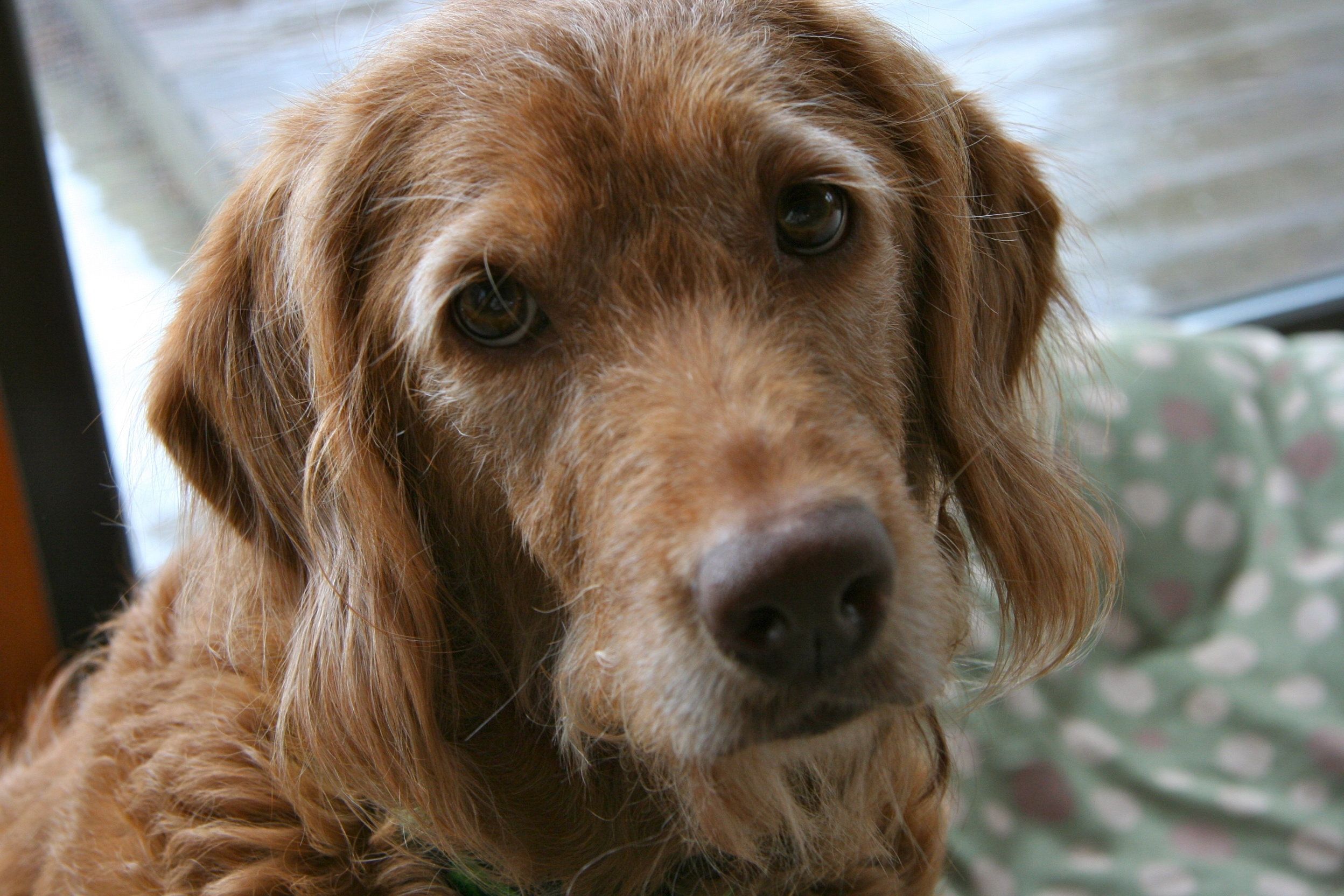 Addison S Disease In Dogs Shot