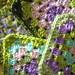 For Crochet a Rainbow project by Vējš matos aka Elizabeth Cat