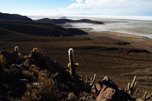 blue cactus sky sun white clouds cacti view salt bolivia plain cactuses whiteness salardeuyuni saltplain chuvica