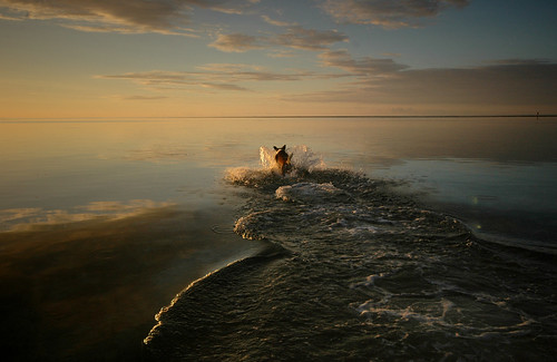 dogs beauty fiji sunrise islands action infinity