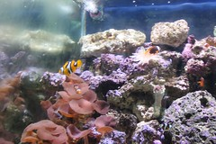 coral reef, coral, fish, coral reef fish, organism, marine biology, invertebrate, fauna, aquarium lighting, freshwater aquarium, natural environment, underwater, reef, pomacentridae, aquarium,