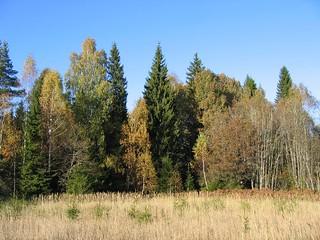 Selles metsas kasvavad võiseened