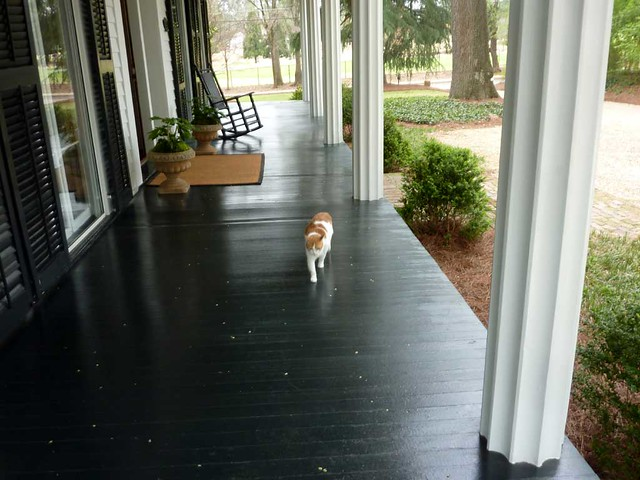 P1080943-2011-03-20-Meadow-Nook-Pheonix-Flies-Alston-House-Porch-Cat