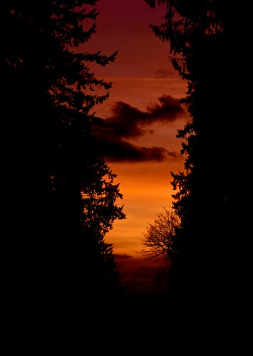 trees sunset cloud tree silhouette clouds raw sony 330 evergreen alpha a minolta50mmf17