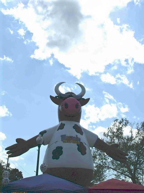 HF COW I