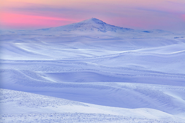 Palouse Winter Pinks