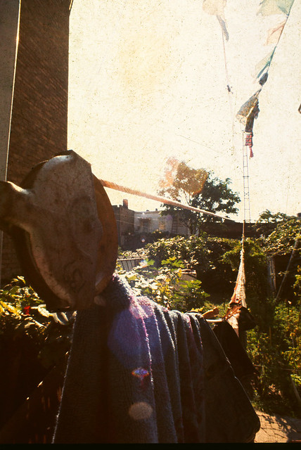 Boro Park Brooklyn Clothesline Pulley & Fig Trees, Grape Vines 1977 70s