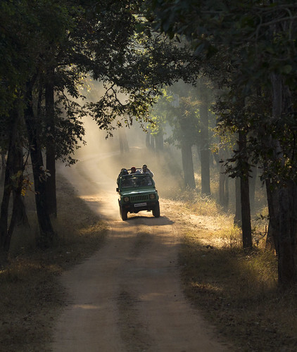 Pench National Park, MP