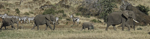 africa geotagged kenya cd ken masaimara riftvalley lolgorien cdkenyaandparis geo:lat=127087661 geo:lon=3503334045 cd0914