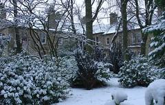 rear of house winter