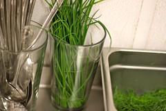 flowerpot(0.0), flower(0.0), grass(0.0), plant(0.0), produce(0.0), vegetable(1.0), wheatgrass(1.0), herb(1.0), green(1.0),