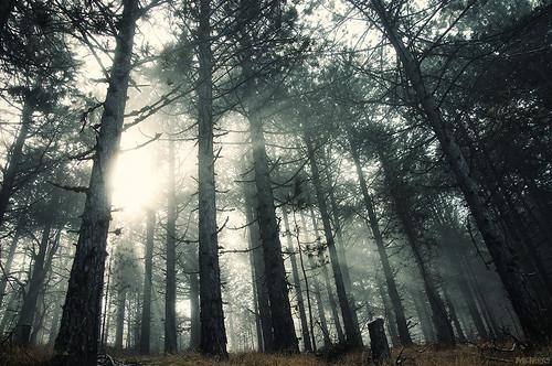 trees light tree fog forest nikon spirit greece fairy macedonia coming nikkor vr 18105 d90 f3556 δέντρα του kozani ομίχλη δέντρο κοζάνη νεράιδα δάσοσ μακεδονία φωσ πτολεμαιδα πνεύμα 18105vr δάσουσ βέρμιο mesovouno mygearandme νεράϊδα μεσόβουνο