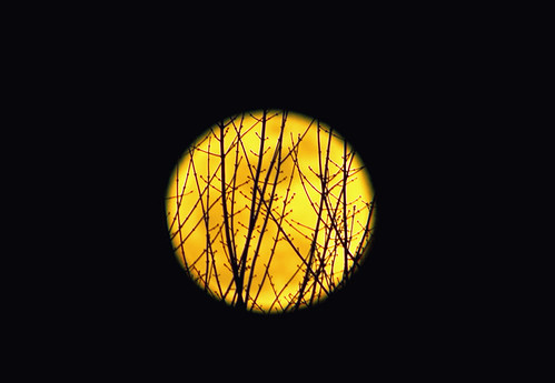 Super Moon with Branches--Explored