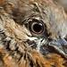 Eye of Bird  by Condix
