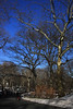 Trees in Central Park by lefeber