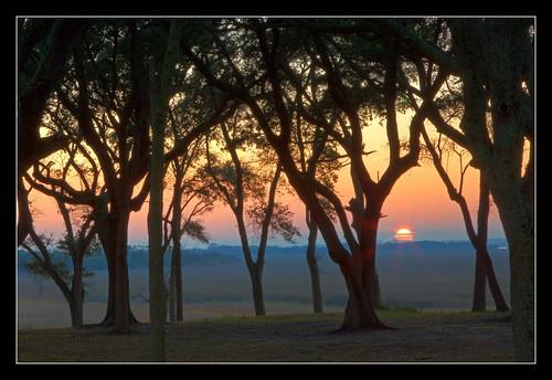 trees sunset sun silhouette canon coast nc northcarolina hdr ftfisher photomatix tonemapped hdraddicted 5dii
