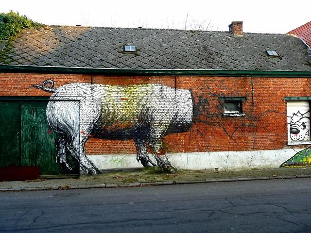 graffiti | roa | doel . belgium
