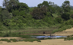From Letaba Bridge